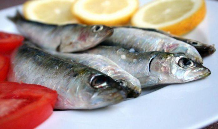 pesce azzurro elenco tipi benefici per la salute