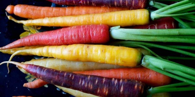 Carote: proprietà, benefici, usi, rimedi naturali e controindicazioni. Scopri le proprietà delle carote, i benefici per la salute, gli utilizzi in cucina o come rimedio naturale, le controindicazioni e gli effetti collaterali.