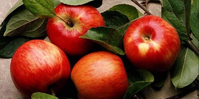 mela mele - proprietà benefici rimedi naturali e controindicazioni