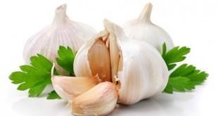 Aglio: proprietà, benefici, uso e controindicazioni. Scopri le proprietà curative e terapeutiche dell'aglio, i benefici per la salute, i motivi per mangiare aglio, le controindicazioni e gli effetti collaterali.