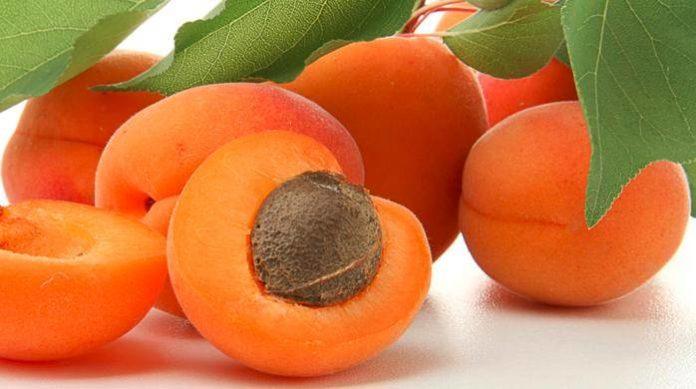 Albicocche: proprietà, benefici, valori nutrizionali, calorie e controindicazioni