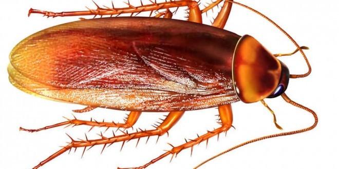 Come eliminare blatte e scarafaggi in modo naturale senza - Eliminare formiche in casa ...