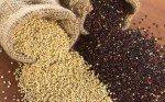 Quinoa: proprietà, benefici, valori nutrizionali, calorie, utilizzi e controindicazioni