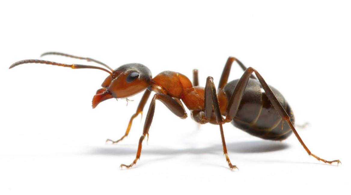 Come eliminare le formiche da casa velocemente e in modo naturale - Formiche in casa ...