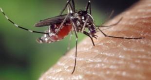 Come eliminare le zanzare in casa - Rimedi naturali contro le zanzare
