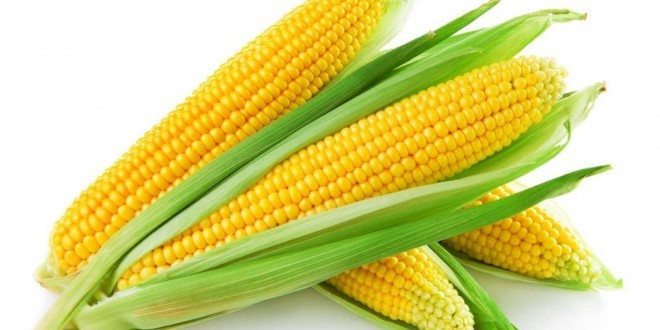 Mais: proprietà, benefici, valori nutrizionali, calorie, utilizzi e controindicazioni