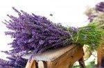 Eliminare i cattivi odori: ecco come profumare la casa in modo naturale