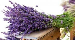 Come eliminare i cattivi odori in casa - Come profumare la casa in modo naturale