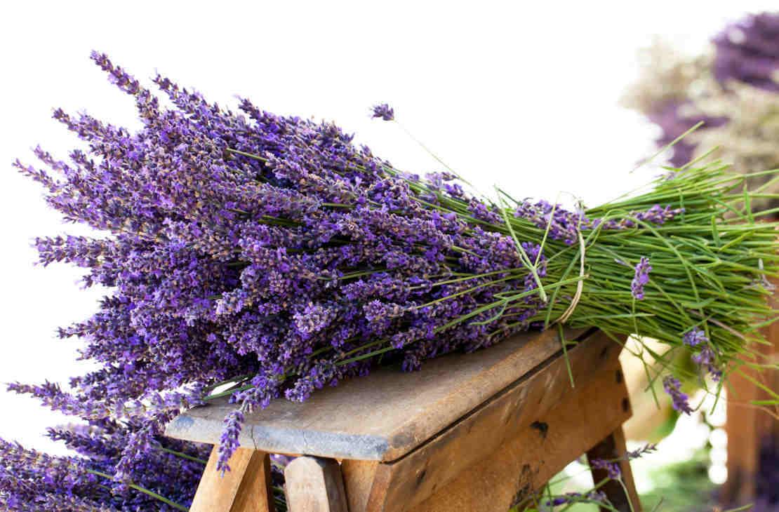 Eliminare i cattivi odori come profumare la casa in modo - Eliminare gli odori in casa ...