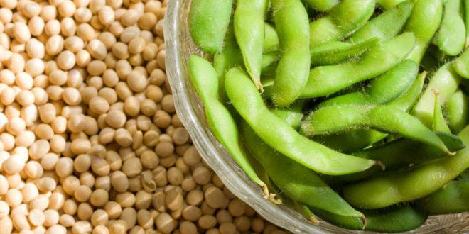 Come cucinare la soia - Ricette con la soia facili e veloci