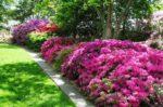 azalea giardino - come coltivare le azalee in giradino