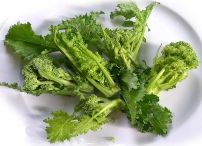 Cime di rapa (broccoletti o friarielli) - proprietà, benefici, utilizzo e controindicazioni. Scopri le proprietà delle cime di rapa, i benefici per la salute, tutti gli utilizzi, le controindicazioni e gli effetti collaterali.