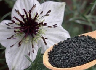nigella proprietà benefici utilizzo rimedi naturali controindicazioni