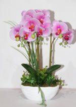 orchidea vaso - come curare le orchidee e come coltivare le orchidee in vaso sul balcone