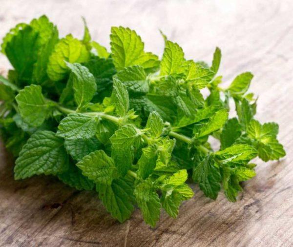 Menta pianta officinale aromatica. Scopri le proprietà della menta, i benefici per la salute e gli usi come rimedio naturale.
