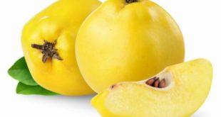 Mela cotogna proprietà benefici uso ricette e controindicazioni.