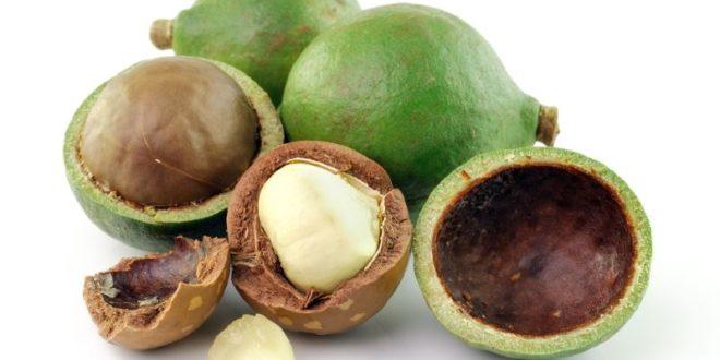 Noci Di Macadamia Propriet Benefici Uso Valori