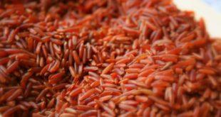 Riso rosso: proprietà, benefici, valori nutrizionali, uso e controindicazioni. Scopri le proprietà del riso rosso fermentato, i benefici per la salute, gli usi in cucina, le controindicazioni e gli effetti collaterali.
