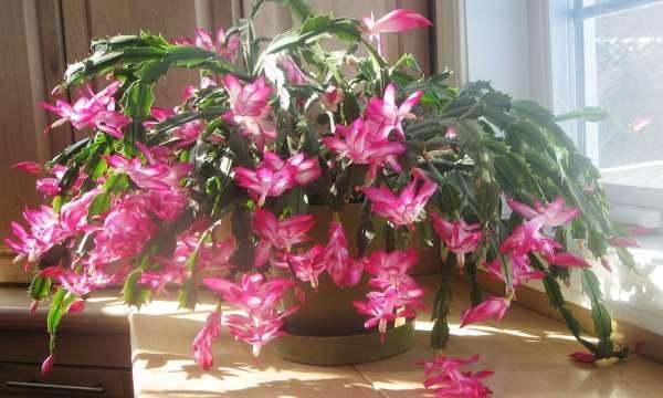 Piante grasse da interno quali sono pi belle e - Piante fiorite da appartamento ...