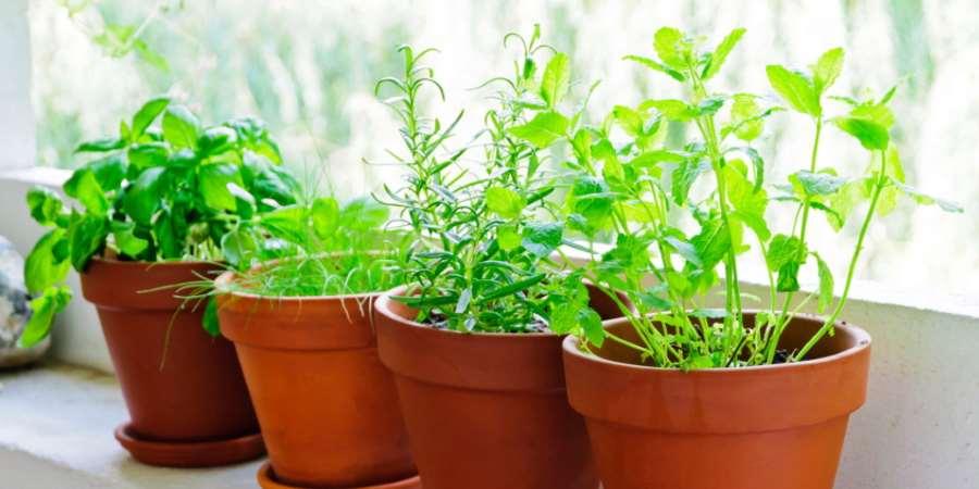 Piante aromatiche da coltivare in vaso sul balcone: quale scegliere?