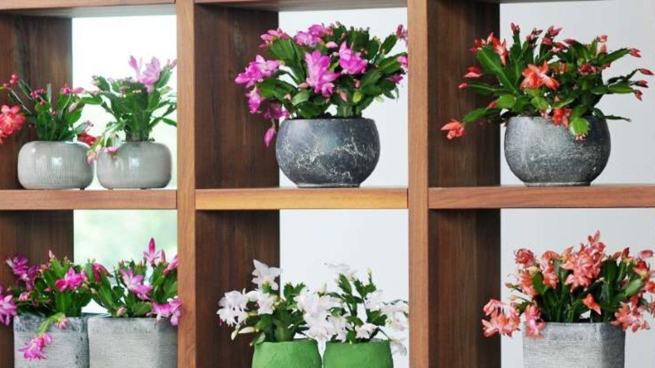 Piante Da Arredo Appartamento piante grasse da interno: quali sono più belle e resistenti
