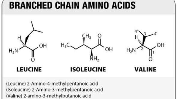Integratori di Aminoacidi Ramificati BCAA ( Leucina, Isoleucina e Valina) . Cosa sono, a cosa servono e quando integrare gli aminoacidi ramificati, indicazioni e controindicazioni.